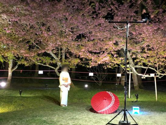 醍醐寺の桜と着物姿の女性
