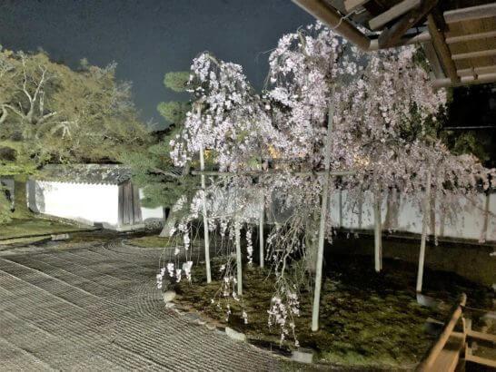 醍醐寺の庭園のライトアップ