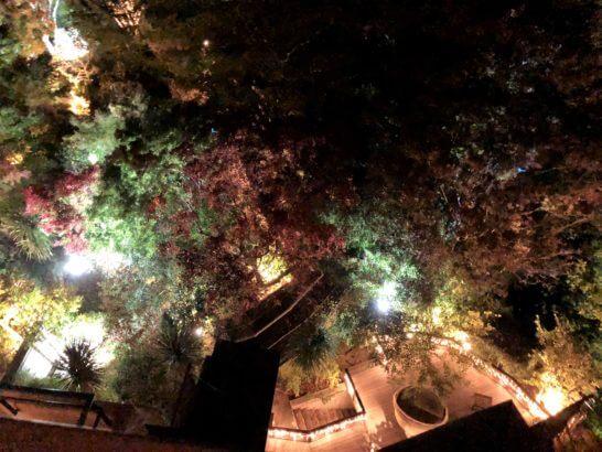 箱根吟遊のライトアップ
