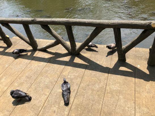 有栖川宮記念公園の端にとまる鳥