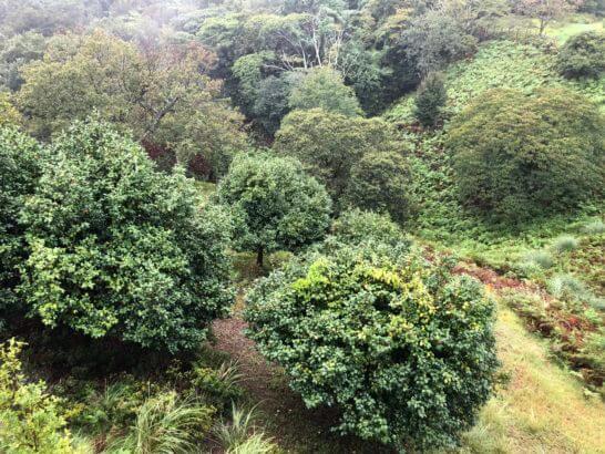 伊豆マリオットホテル修善寺の温泉付きデラックスルームからの眺め