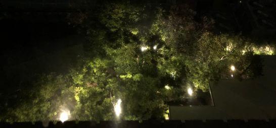 ロイヤルパークホテルの夜の庭園