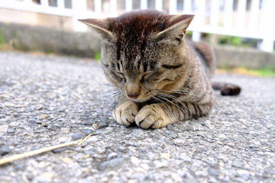 土下座する猫