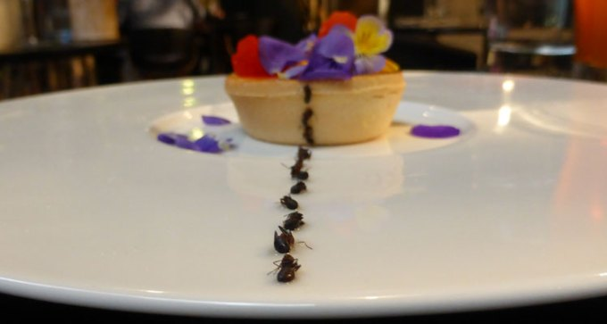 The ants got to the tart first