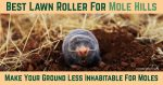 Best Lawn Roller For Mole Hills