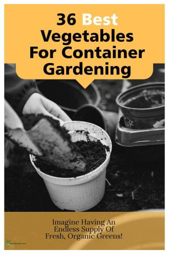 Good Vegetable Plants For Container Gardening Post Graphic
