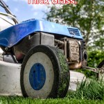 Top Lawn Movers For Thick Grass