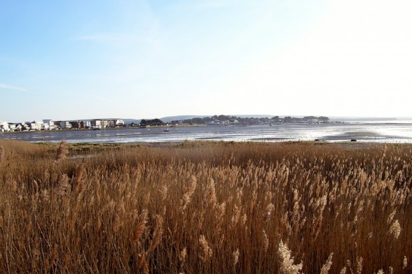 Shore Road View