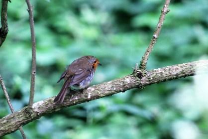 Espie.Bird