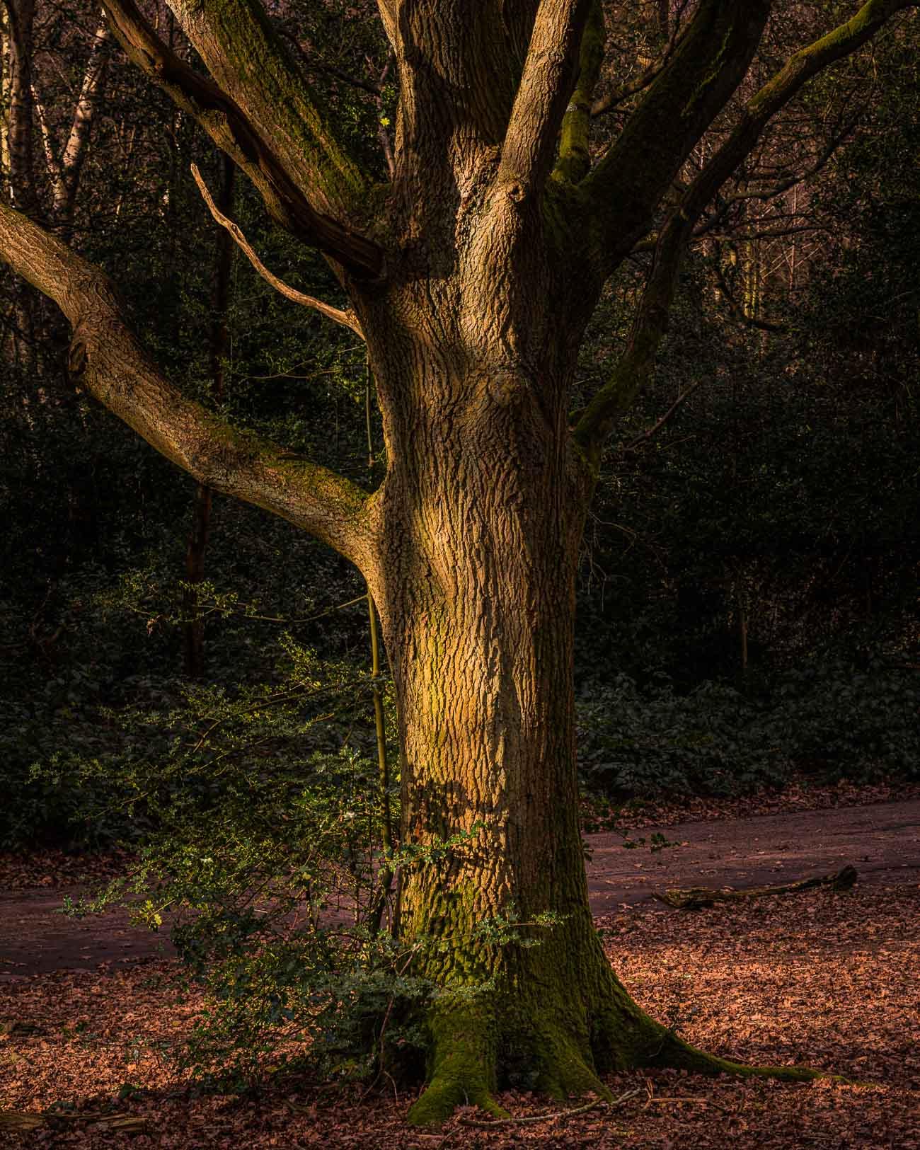 Lone tree in golden light
