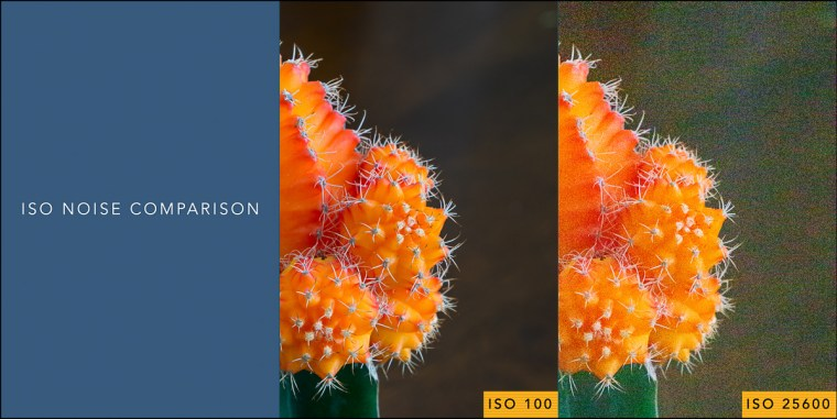 Side-by-side comparison between two images of an orange cactus. The image on the left is taken at ISO 100. The image on the right is taken at ISO 25600.