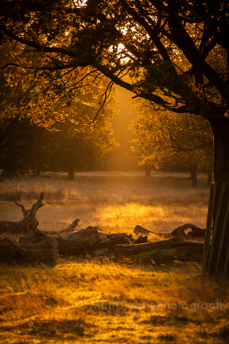 Autumn in Richmond Park