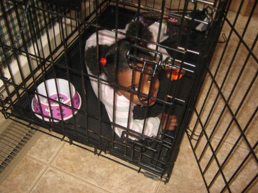 Mihret in a dog crate