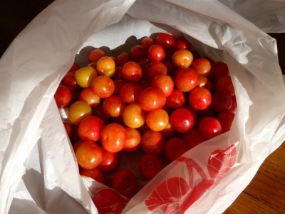 Seward Street plums