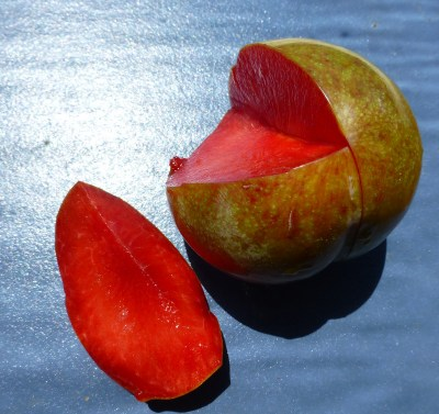 Dapple Fire pluot