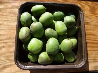 baby kiwi fruit