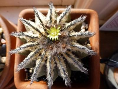 ungrateful cactus