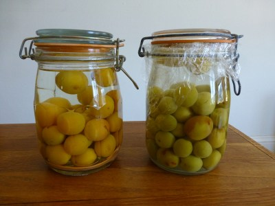 macerating ume plums