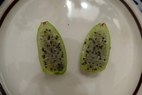 Epiphyllum fruit