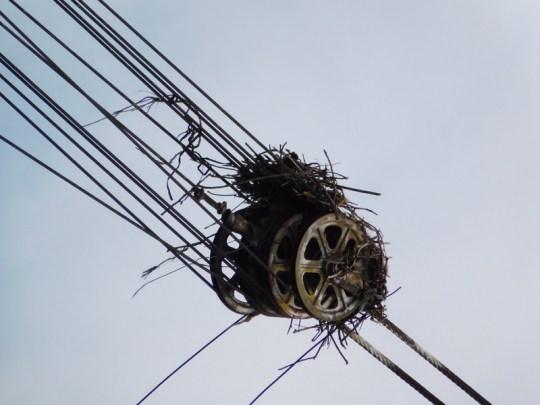 Willamette Osprey Nest Crane
