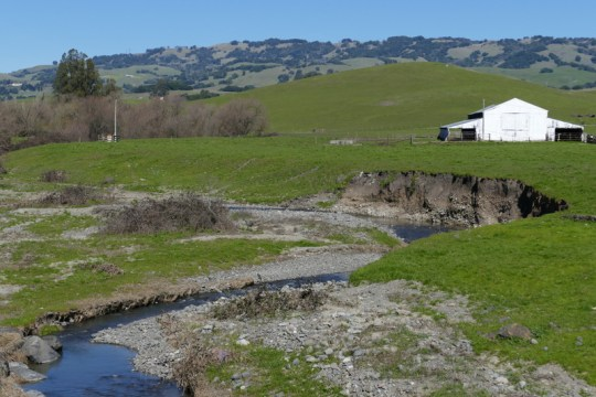 Lynch Creek east of Petaluma