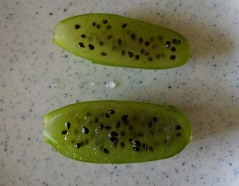 E. anguliger fruit, split