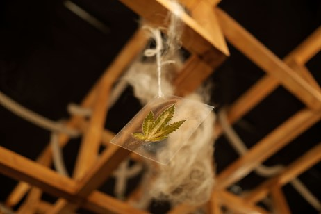 """A leaf of hemp hanging from the ceiling of the cultural association """"Canapa caffè"""" that deals with industrial hemp and therapeutic cannabis. Rome, Italy 2016. © Matteo Bastianelli"""