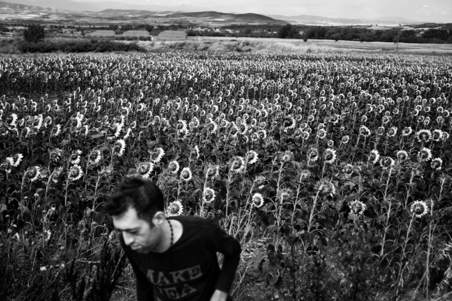 28-year-old Syrian refugee Ahmad Rakie is seen leaving a sunflower patch after he was attacked by two smugglers on the road. They took his phone and 300 euro. Evzoni, Greece 2015. © Matteo Bastianelli