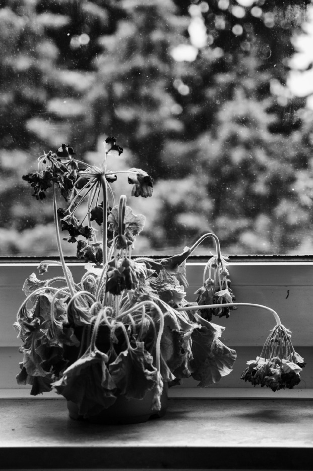 A dying plant near the window in Mohamad and Hani's apartment. Soest, Germany 2017. © Matteo Bastianelli