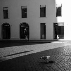 A seagull is seeneating the remains of a pigeon in front of the windows of a historic luxury store in Piazza di Spagna on the day that the World Health Organization (WHO)declaredthe Coronavirus outbreak apandemic. Rome, Italy 2020. © Matteo Bastianelli