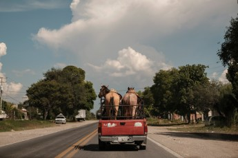 A pickup carrying two horses, is seen on the road to Tehuacán, Mexico 2019. © Matteo Bastianelli