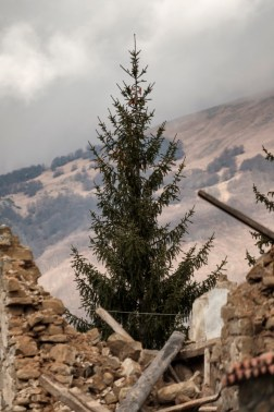 A fir-tree between the ruins of some buildings destroyed by the earthquake that took place on August 24. Amatrice, Italy 2016. © Matteo Bastianelli