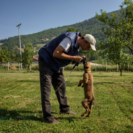 """The dog trainer Alexandar Malinić plays with Yan, a 3-month-old Belgian Shepherd dog. A Mine-dog begin his training at the """"Global Training Center for Mine Detection Dogs"""" as puppy, in order to become a Mine Detection Dogs (MDD) or an Explosive Detection Dogs (EDD). Vogošća, Bosnia and Herzegovina, 2014."""