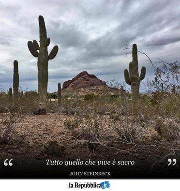 Frase di John Steinbeck