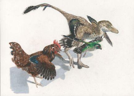 feathery-dinosaurs-Jason-Brougham-1024x732