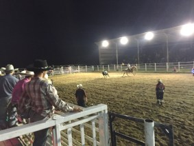 the bull chasing the horseman