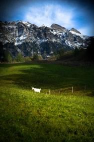 Travel_Switzerland-11