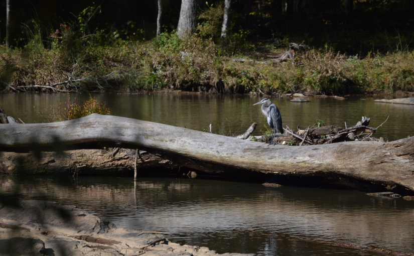 Heron at Sweetwater Creek Park in Georgia