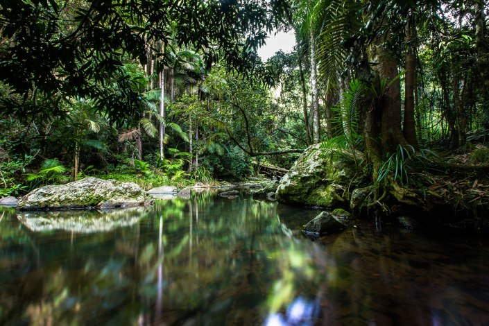 reflective pools along the river in springbrook national park