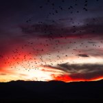 a flock of birds fly towards the sun as red clouds catch the last light of day
