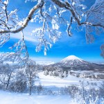 frosted trees frame a snowcapped volcano under a blue sky