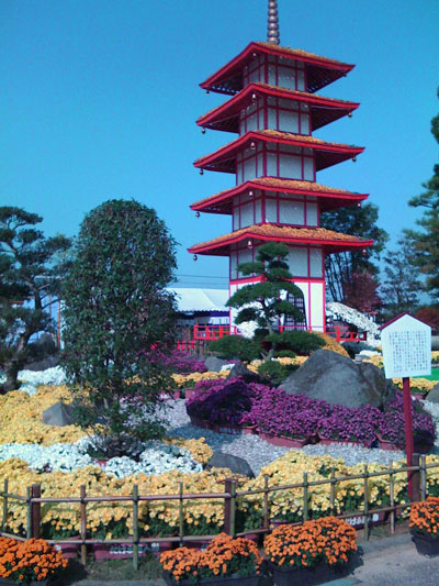 Chrysanthemum pagoda
