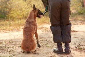 Ngwenya with her handler. PICTURE: Ravi Gajjar