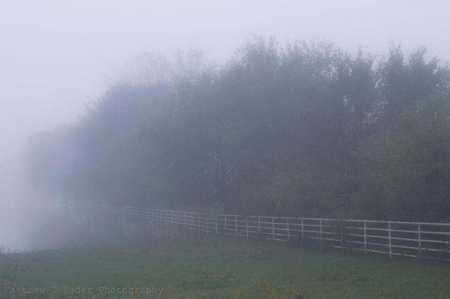 Trees Fading Into the Texas Fog