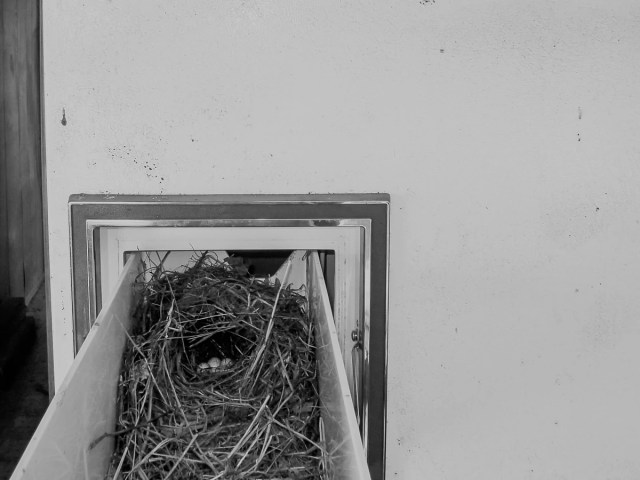 A bird's nest in an Abandoned Mobile Home in East Texas