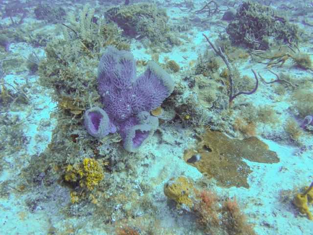 Sponge coral in Cozumel, Mexico