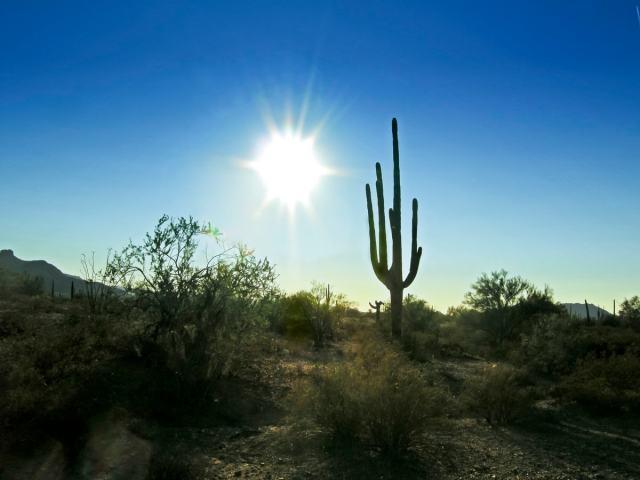 A cactus at sunset in Saguaro National Park, Arizona