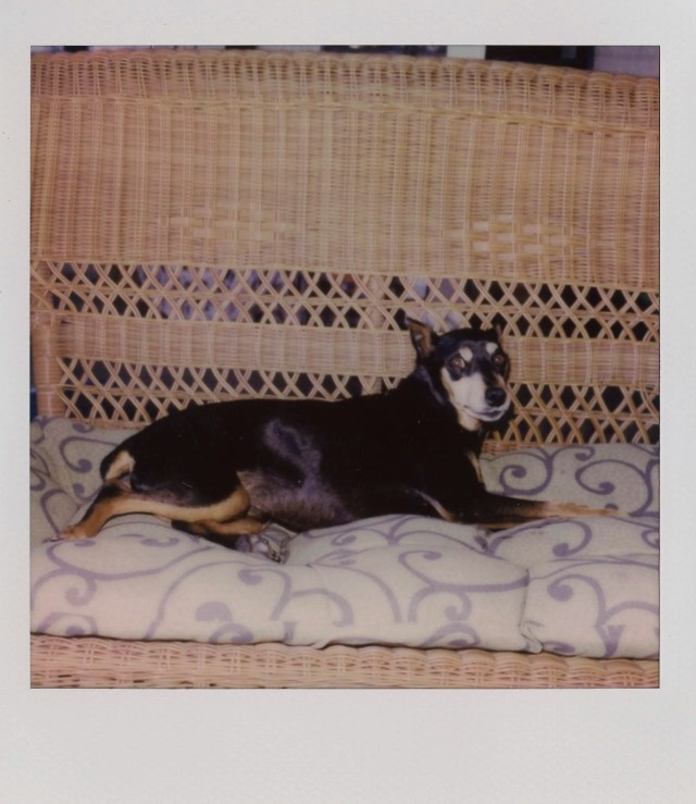 Gambit relaxing outside during his last days Polaroid photos