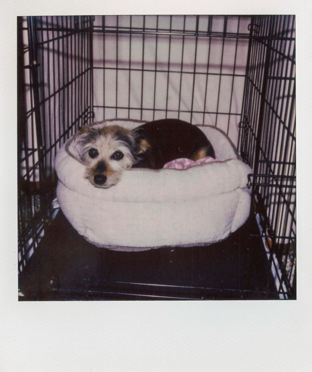 Lucy in her kennel
