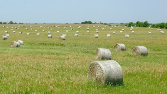 Hay bales in a pasture